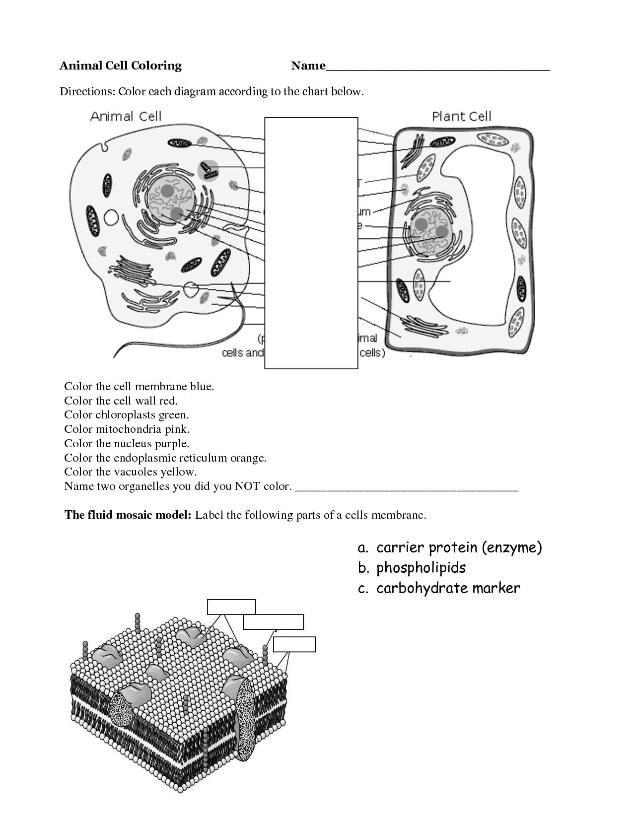 Cell organelle Coloring Worksheet