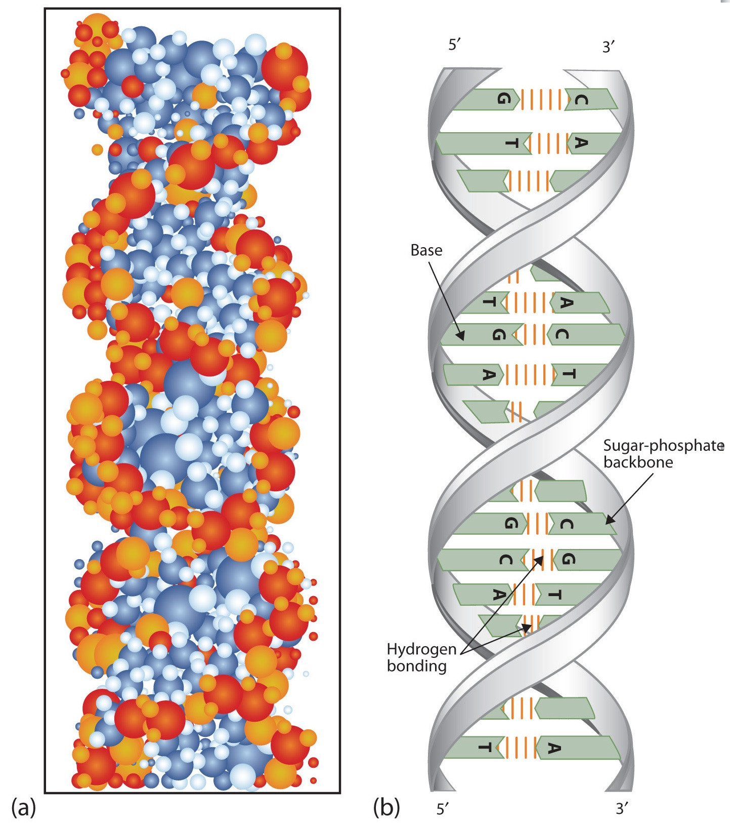 Double Helix Coloring Worksheet