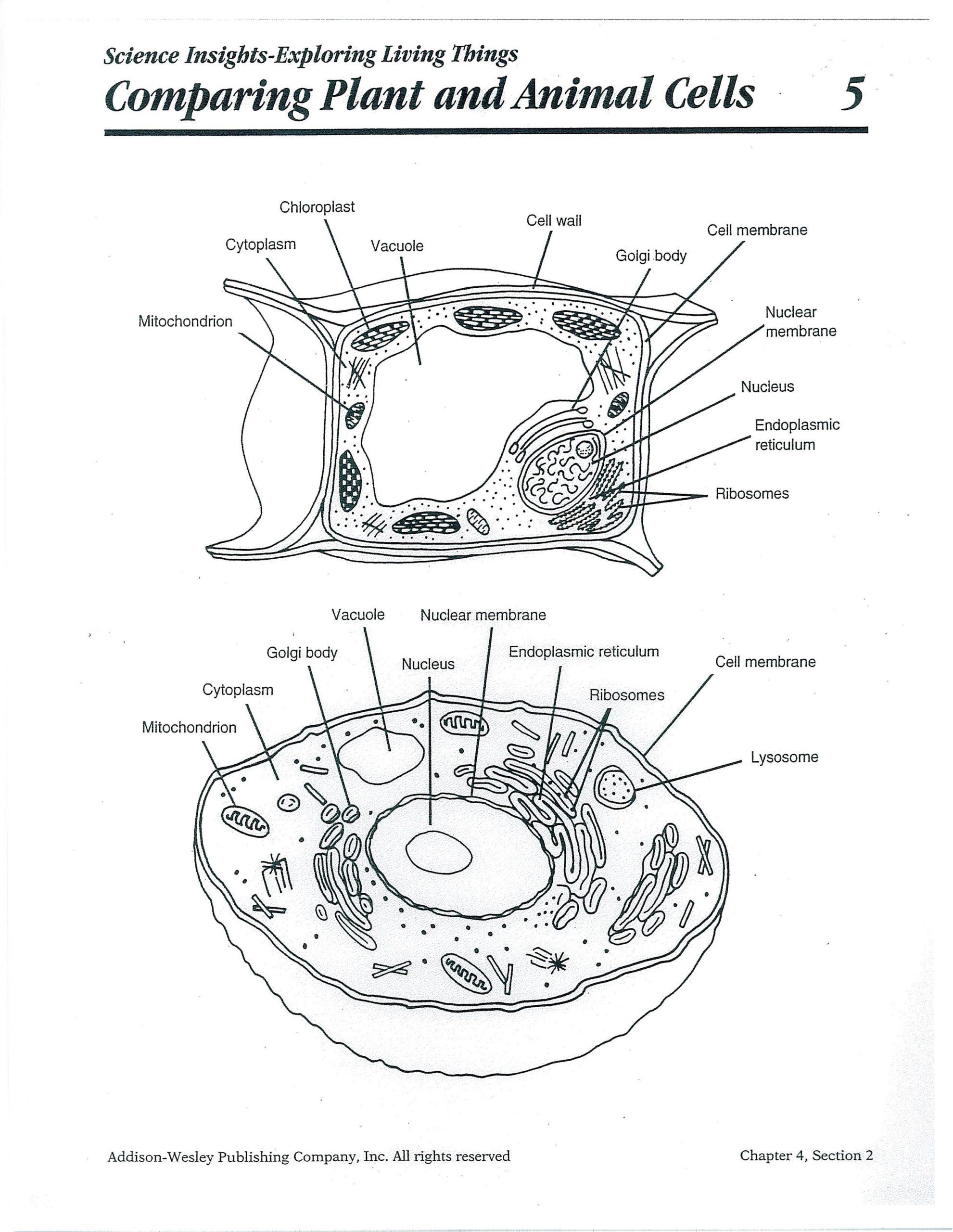 Label the Animal Cell Worksheet