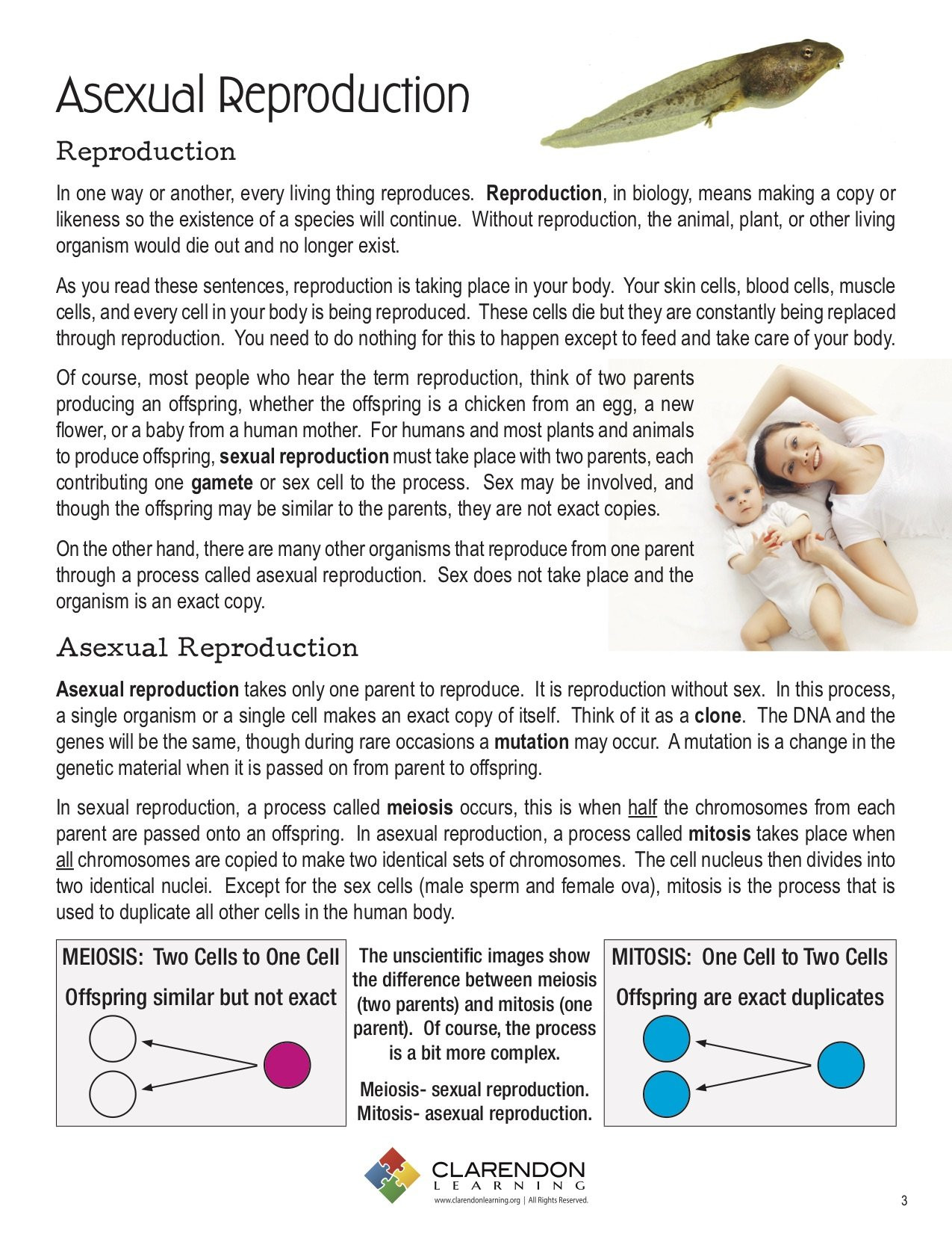 Asexual Reproduction Worksheets Middle School